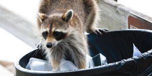 San Antonio animal removal